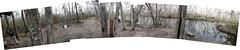 swamp 5 (aranreo) Tags: island scout tkf karankawa
