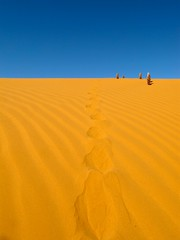 camel footprints (ahmedioo) Tags: sand desert footprints camel  saudia     flickraward addahna flickraward5