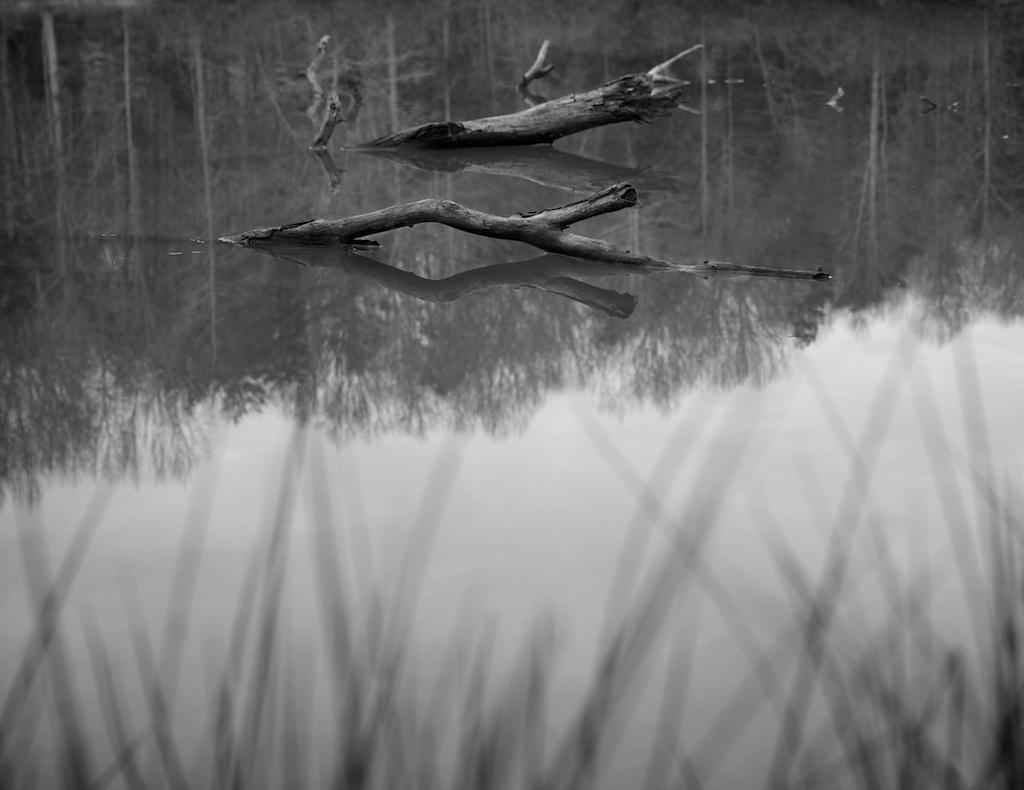 68/365: Lake Michael