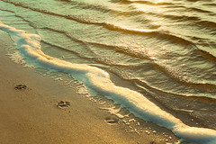 ~ paw prints. (CarolynsHope) Tags: ocean blue sea dog sun beach nature water yellow gold bay sand nikon warm waves d70 pastel scenic peaceful sunny shore prints serene ripples paws pawprints
