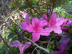 Garden Blooms March 15, 2010 - 8