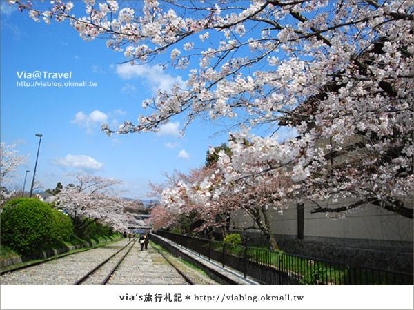 【via京都賞櫻行】鐵道上的櫻花美景~蹴上鐵道2
