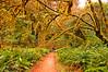 Tentacles of life (kmanohar) Tags: california northerncalifornia worldheritagesite humboldtcounty redwoodnationalpark bigtreetrail northerncaliforniacoast temperaterainforest prairiecreekstatepark prairiecreek redwoodpark prairiecreekredwoods redwoodcoast humboldtcountyca humboldtcountycalifornia prairiecreekredwoodsstatepark redwoodsstatepark pacificrainforest klamathcalifornia prairiecreekpark internationalbiospherereserve redwoodpreserve californiarainforest northwestrainforest redwoodreserve bigtreelooptrail bigtreeprairiecreek