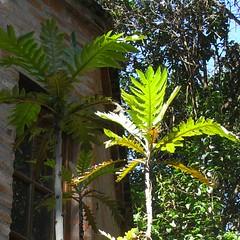 De_Sol_Estar-RIMG5922-800x800 (Weltbummler) Tags: yerbabuena tucumn desolestar
