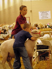 09 TN State Fair #79: a boy and his Sheep
