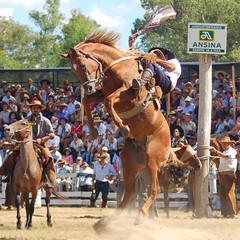 El tostao (Eduardo Amorim) Tags: horses horse southamerica ca