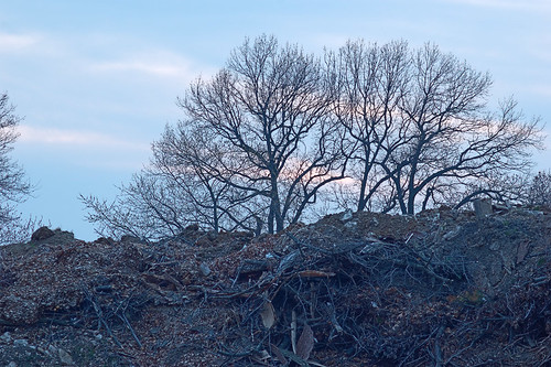River des Peres Greenway, in Saint Louis, Missouri, USA - trees over compost pile