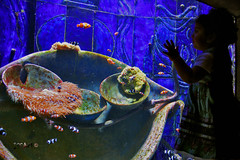Aquarium ATLANTIS Hotel Dubai (Mct-Enigma) Tags: fish aquarium hotel dubai gulf uae palm atlantis    aquaventure emarates jumera