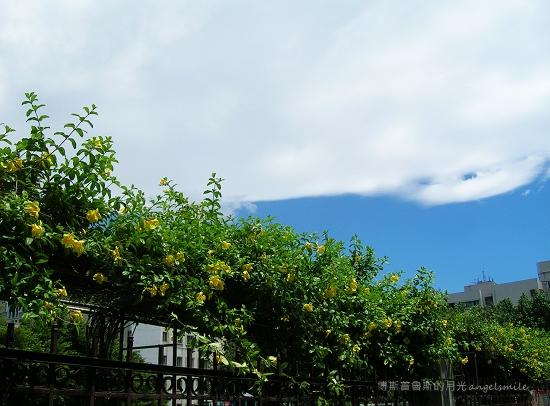 天空一抹雲 (台北市信義區某公園)