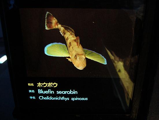 有長腳奇怪的魚