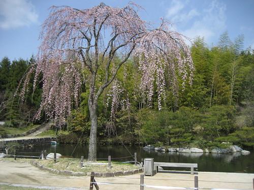 広島空港 三景園 画像9