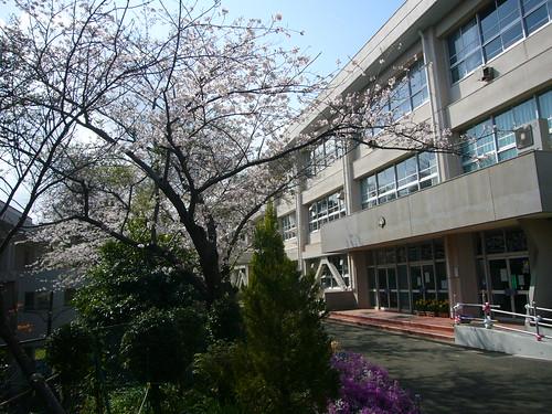 横須賀市立高坂小学校と桜