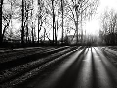 shadowy sunset (taryntella2) Tags: light sunset shadow bw shadows lightandshadow thepinnaclehof tphofweek42