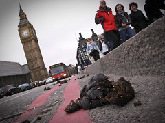 State Today 2010 (grobs gfx) Tags: london housesofparliament bigben tourists vignette smelly touristattraction dung westminister 2010 londonbus londonist ukgeneralelection horsedung westministerbridge doubleredlines