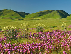Green Hills of Kern County (Marc Briggs) Tags: owlsclover castillejaexserta purpleowlsclover kerncounty highway58