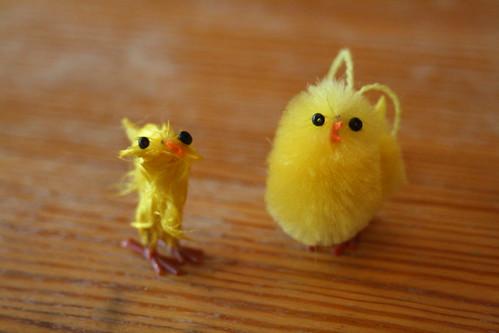 Gissa vilken kyckling Ava har fått tag i..?