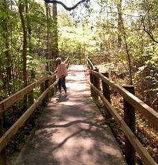 Boardwalk At Falling Waters State Park, FL (bill.fu) Tags: statepark florida 100views fu soe 2010 1000views aplusphoto