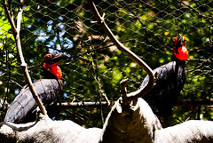 DON'T KNOW THEM, guess yourself (Bernat Nacente Foto) Tags: barcelona animal zoo spain fuji melody pro fujifilm catalunya mm 300 nikkor 70 vr 動物 s5 動物園 スペイン バルセロナ nohdr flamenc s5pro カタルニャ