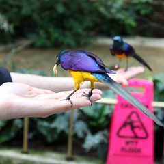 North Shore: National Aviary