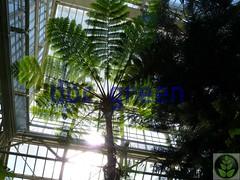 Berlino - Giardino Botanico