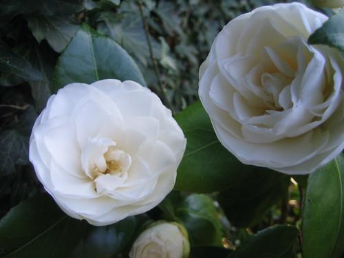 garden042010 040
