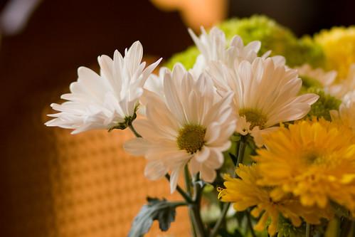 spring flowers 015-1