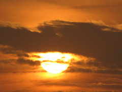 IMG_0433 (QtrTrd) Tags: morning sky cloud sun moon tree bird night bug lemon pigeon dove pomegranate parrot shy full date                    buteerfly