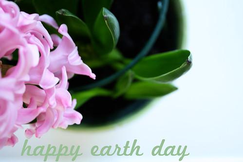 earthday hyacinths