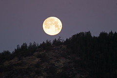 Happy Earth Day from the Man in the Moon! (Peggy Collins) Tags: moon canada silhouette landscape interestingness searchthebest britishcolumbia fullmoon explore treeline penderharbour sunshinecoast earthday naturesfinest happyearthday peggycollins