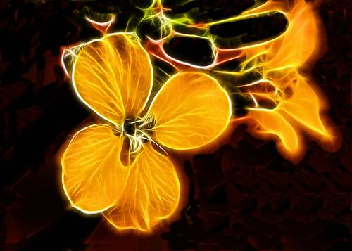5x7 Wildflower, Zion fract  IMG_8679