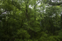 """""""Just greenery and humid air"""" (clay.wells) Tags: lighting county trees green nature leaves forest canon photography eos spring woods natural clayton wells greenery arkansas usm lush saline ef 1740mm 2010 benton f4l 40d img1076"""