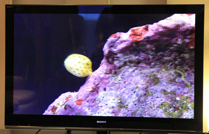 SONY BRAVIA 3D TV LX900 V52 美ら海水族館