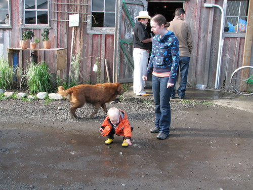 Barn, dog, baby and mud