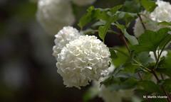 en el jardín botánico: flores variadas