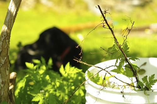 Weeding and Seeding