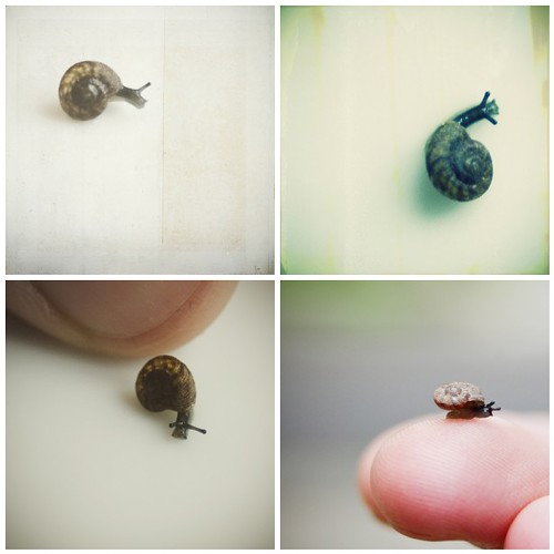 Snails (by pricklypearbloom)