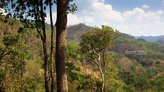 Trees and Mountains (Bastiaan Schuit) Tags: trees clouds canon thailand jungle pai landcape maehongson