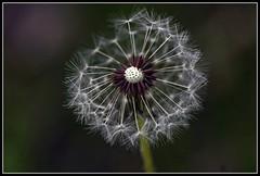 a world apart (mrocki1) Tags: flowers macro masterphotos