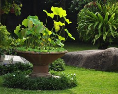 Tropical Garden (KC Toh) Tags: garden lotus tropical 荷花 d90 绿色 花园 荷叶