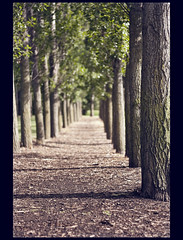 A Peaceful Path (Julio Barros) Tags: trees green leaves canon 50mm path f18 xsi canonxsi