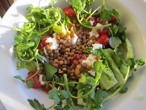 lentil, mozarella, tomato salad
