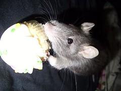 Dory's bday cupcake. (xxchellzxx) Tags: stars halo tattoos rats bungie dumborat jeffreestar nerdyness lookatmyhorse