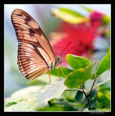 Butterfly-Madness (Joost N.) Tags: flowers plants holland color macro colors amsterdam closeup butterfly flying focus sitting dof nederland mooi fullframe planten bloemen artis vlinders bloem kleuren 105mm vleugels vlindertuin