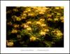 Secret Garden (Jose Luis Mieza Photography) Tags: flowers flores flower fleur fleurs flor benquerencia florews reinante jlmieza reinanteelpintordefuego joseluismieza