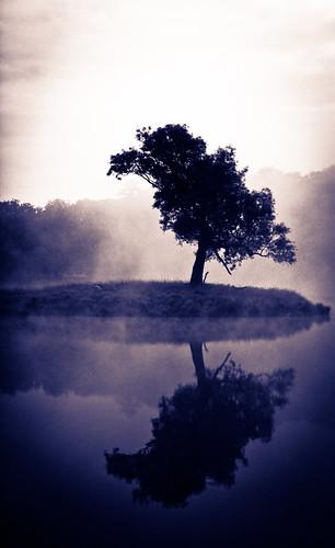 Robinson Tree