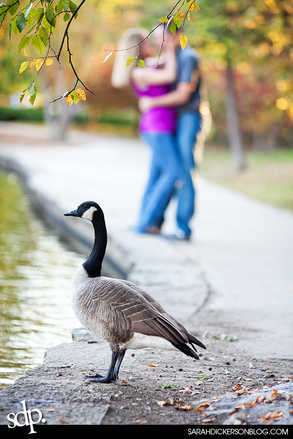 engagement photos, Loose Park, Kansas City Missouri