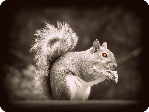 scarysquirrel