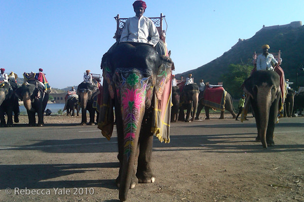 RYALE_Amber_Fort_Elephants_1