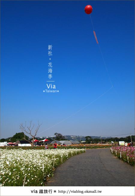 【2010新社花海】via帶大家欣賞全台最美的花海!14