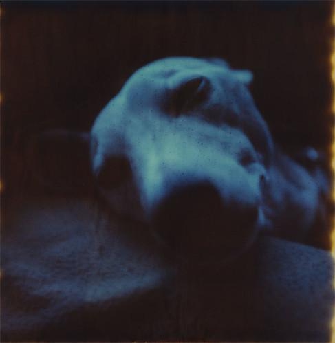 Laika, Dreaming